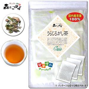 国産 うらじろがし茶 3g×35p ウラジロガシ茶 ティーバッグ 送料無料 ポイント消化 森のこかげ|epicot