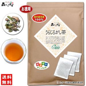 国産 うらじろがし茶 3g×80p ウラジロガシ茶 ティーバッグ 送料無料 森のこかげ|epicot