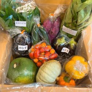 野菜セット 那須野菜 朝採れ野菜 産地直送 農家直送野菜