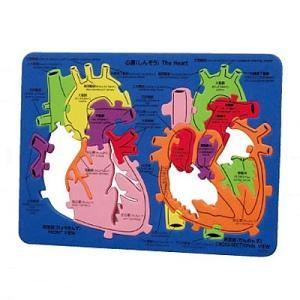 教材景品 心臓の構造パズル epkyoto