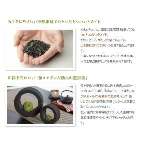 Koke-Pochi(苔ポチ) わん Sサイズ eco-pochi(エコポチ)|erande|05