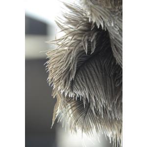 REDECKER レデッカー オーストリッチ フェザーダスター / ダチョウの羽箒 (35cm)(OSTRICH FEATHER DUSTER 35cm)|erande|04