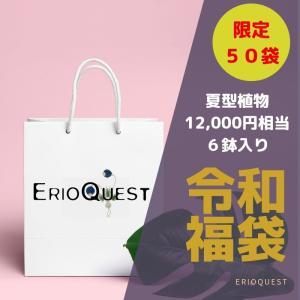 【50個限定】令和福袋 夏型多肉植物6鉢セット【送料無料】 erioquest