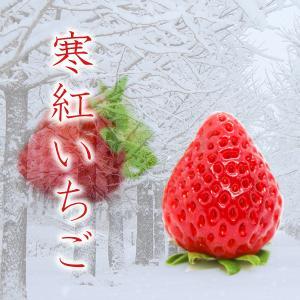 寒紅いちご 愛媛県 新品種 豊洲 産直 esmile-yh