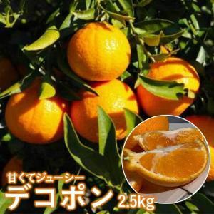 デコポン 2.5kg 柑橘 みかん 豊洲 産直 産地直送 でこぽん 不知火 しらぬひ  熊本県産  蜜柑 家庭用 贈答用 ギフト用 お取り寄せグルメ esmile-yh