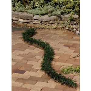タマリュウ(玉竜スリット)4本セット 駐車場 花壇縁取り 植木 庭木 苗木 常緑宿根草|estoah