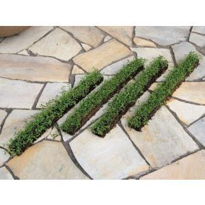 ヒメイワダレソウ(スリット)4本セット 駐車場 花壇縁取り 植木 庭木 苗木 緑化|estoah