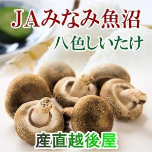 ●八色生しいたけは、菌床栽培で徹底管理された大型・肉厚しいたけです。 ●歯切れも良く、鍋物、お酒の肴...