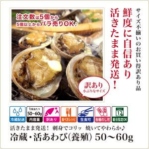 活 アワビ あわび 鮑 (高級 養殖)1個50〜60g  ギフト 海鮮BBQ バーベキュー ((冷蔵)) etizentakaraya 02