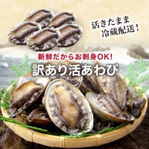 活 アワビ あわび 鮑 (高級 養殖)1個50〜60g  ギフト 海鮮BBQ バーベキュー ((冷蔵)) etizentakaraya 06