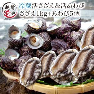 サザエ 1.0kg (天然 日本海産) & アワビ 5個 (養殖 国産) セット (活 さざえ 栄螺) (あわび 鮑) 海鮮BBQ バーベキュー  ((冷蔵))|etizentakaraya