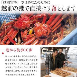 セイコガニ 甲羅盛り 1個(単品) かに カニ 蟹 せいこがに 香箱ガニ せこがに 越前ガニ  香箱ガニ ((冷凍)) etizentakaraya 11