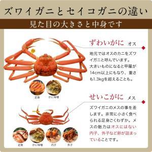 セイコガニ 甲羅盛り 1個(単品) かに カニ 蟹 せいこがに 香箱ガニ せこがに 越前ガニ  香箱ガニ ((冷凍)) etizentakaraya 05