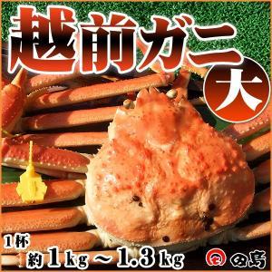 越前ガニ(大)福井県産越前がに・蟹 約 1kg〜1.3kg× 1杯|etizenwakasa