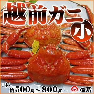 越前ガニ(小)福井県産越前がに・蟹 約500g〜800g×1杯|etizenwakasa