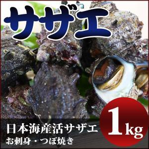 サザエ(1kg)約10個 新鮮・海の幸 活さざえ(お刺身・つぼ焼き)日本海で獲れたサザエを活きたままお届け 御歳暮 ギフト [冷蔵]|etizenwakasa