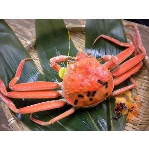 せいこがに(特大)福井県産せいこ蟹(セイコガニ) 約220g×1杯|etizenwakasa