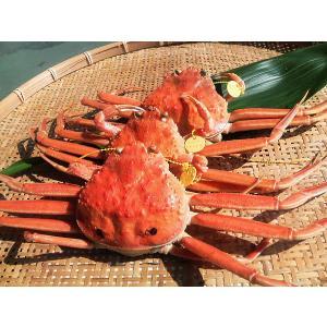 せいこがに(小)福井県産せいこ蟹(セイコガニ) 約100g×1杯|etizenwakasa