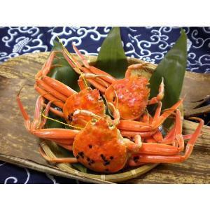せいこがに(中)福井県産せいこ蟹(セイコガニ) 約150g×1杯|etizenwakasa