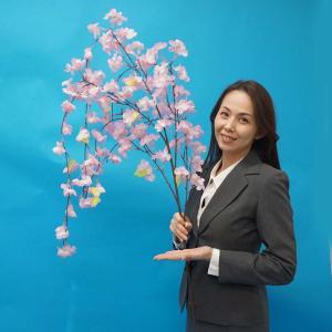 桜装飾 しだれ桜 L135cm たれ幅60cm / 飾り ディスプレイ 春|event-ya