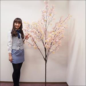 桜装飾 桜立ち木 H210cm / 飾り ディスプレイ 春|event-ya