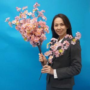 桜装飾 桜スプレー小枝 3本枝 60cm 24本セット / 飾り ディスプレイ 春|event-ya