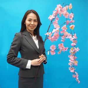 桜装飾 しだれ大桜 L145cm たれ幅60cm / 飾り 装飾 ディスプレイ 春/動画有|event-ya