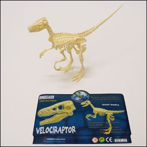 PC恐竜骨格組立キット ヴェロキラプトル / 手作り工作 [動画有]|event-ya