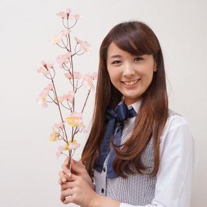 桜装飾 桜スプレー小枝 3本枝 60cm 12本セット / 飾り ディスプレイ 春|event-ya