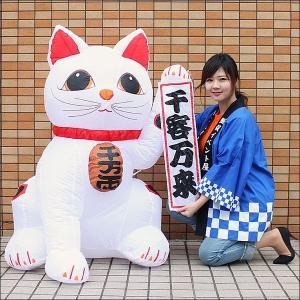 お正月装飾 ジャンボエアブロー 招き猫 Mサイズ 125m / ディスプレイ 飾り / 動画有 event-ya