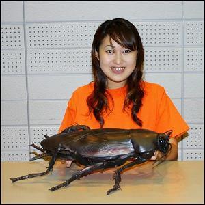 メガゴキブリ 65cm|event-ya