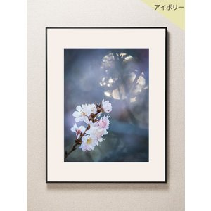 【片岡正一郎】オリジナルプリント「桜」No.1 A3額付き|exa-photo