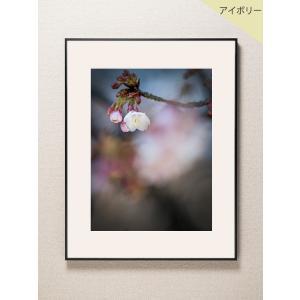 【片岡正一郎】オリジナルプリント「桜」No.5 A3額付き|exa-photo
