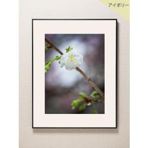 【片岡正一郎】オリジナルプリント「桜」No.8 A3額付き|exa-photo