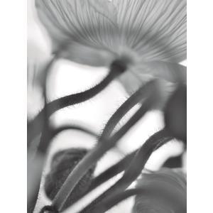 【大坂寛】「Flower」シリーズ #7 オリジナルプリント マット付き|exa-photo