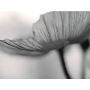 【大坂寛】「Flower」シリーズ #8 オリジナルプリント マット付き|exa-photo