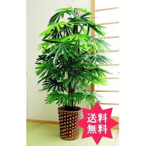 【送料無料】観葉植物 観音竹|exis