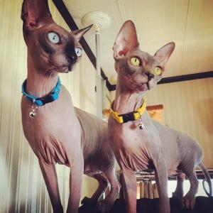 首輪 猫 スタッズ 革:Cats Btype 002(平尖鋲)【色は10色以上から、サイズは1cm単位でオーダー】|extraheavyy|03