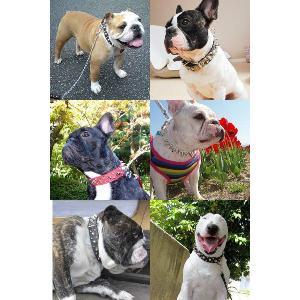 首輪 中型犬用 スタッズ 革 3cm幅:3cm Type 006(14mm+8mm鋲)【色は10色以上から、サイズは1cm単位でオーダー】|extraheavyy|03