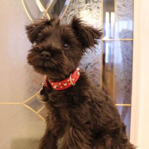 首輪 小型犬用 スタッズ 革 2cm幅:Small Type G5-003(8mm+4mm丸鋲) *色は十色以上から、サイズは1cm単位でオーダー|extraheavyy|05