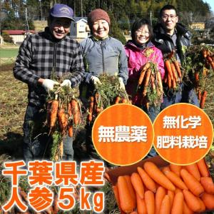 【千葉県産】無農薬人参5kg(無農薬ジュース用にんじん・訳あり)