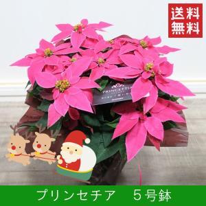 花鉢「プリンセチア 5号鉢」 クリスマス お歳暮 誕生日 お祝い お正月飾り花 花 鉢植え ギフト プレゼント 送料無料|f-hanasyou