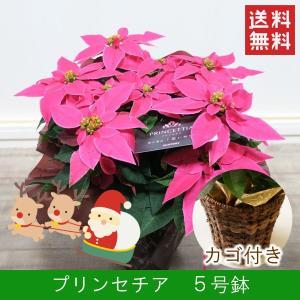 花鉢「プリンセチア 5号鉢 カゴ付き」 クリスマス お歳暮 誕生日 お祝い お正月飾り花 花 鉢植え ギフト プレゼント 送料無料|f-hanasyou