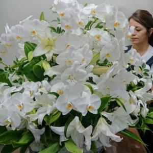 胡蝶蘭とカサブランカのビックな華やかアレンジ|f-kinomi