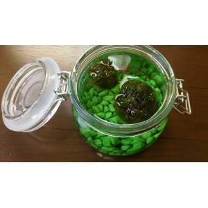苔玉 盆栽苔 ミズ苔アクアリウム ガラス容器入り