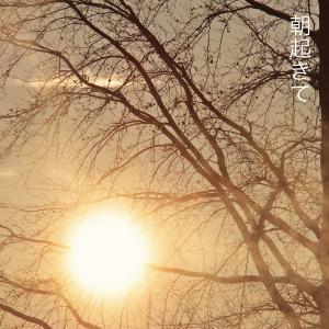 アーティスト名 MANA/CD やさしさ|fabala|02