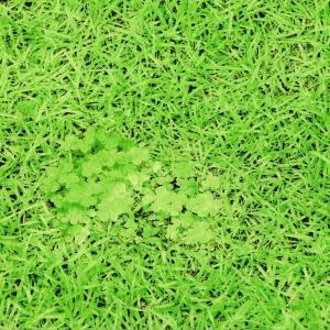 生地 1m単位 リアルPt オックス ぷらんぷ ちぃくす 芝生でゴロン H-3037-1-A25 布  W-YRT.|fabrichouseiseki