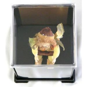 コレクションケース フィギュアケース 人形ケース 背面金張り仕様 W12cm×D12cm×H8cm|fairy-land|06