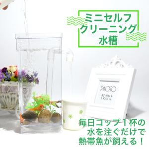 ミニセルフクリーニング水槽 卓上水槽 アクアタンク 自動水換え エコ アクアリウム デスクトップ 小型魚 エビ 水草 ベタ|fairyselection