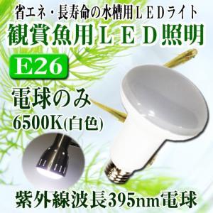 ◆定形外郵便発送可能◆観賞魚用LED照明 6500K(電球のみ)|fairyselection